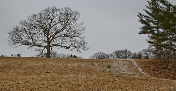 beauty in bare branches, at Maudslay State Park, Newburyport, MA