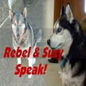 Rebel & Suzy Speak!