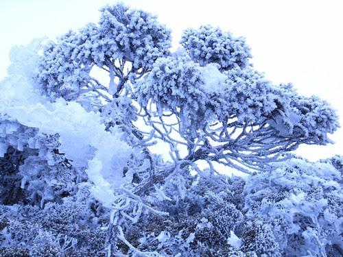 美麗的雪景