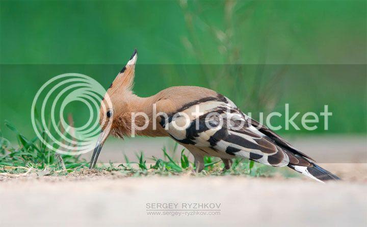 photo Sergey-Ryzhkov-2_zps3unx5wsi.jpg