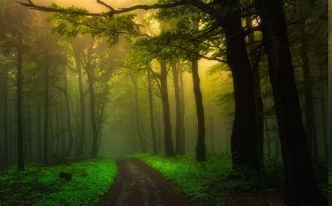 nature landscape dirt road mist forest sunrise path