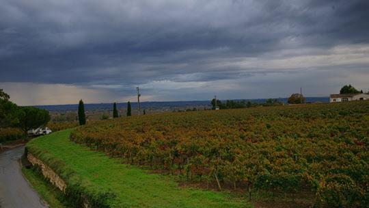 요즘같은 11월에는 오후 네시반이면 사위가 어둑어둑해진다. 포도밭이 짙은 먹구름에 하루를 마감한 채비를 하고 있다./사진=이서현