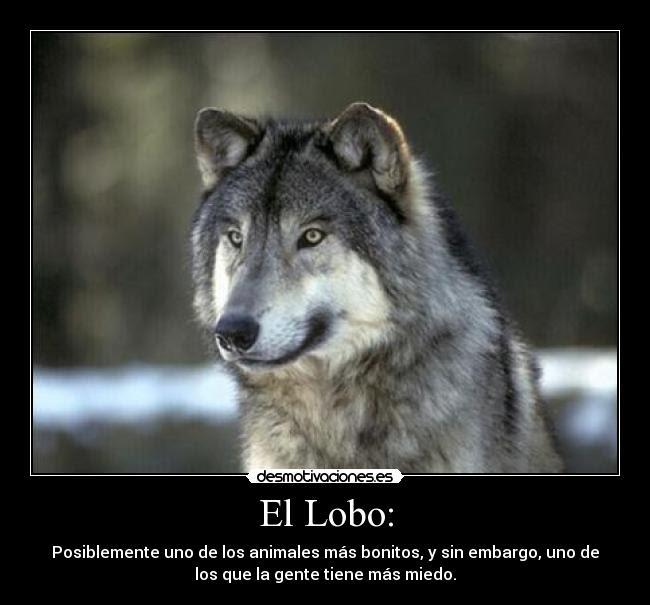 El Lobo Desmotivaciones