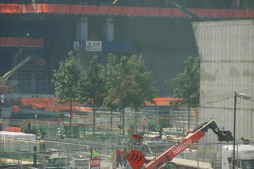 9/11 Memorial Trees