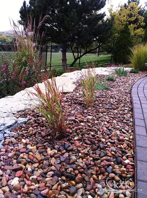 IMG_1130 2 Shenandoah Switchgrasses