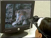 Estudiante mira una foto de un tigre durante uno de los experimentos.