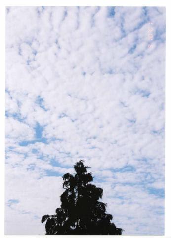 cloudscedar