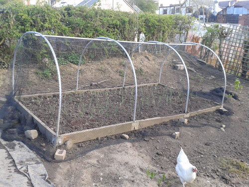 netted polytunnel May 13