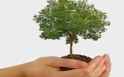 Feliz Día Del árbol Iofacturo Facturación Electrónica Simplificada