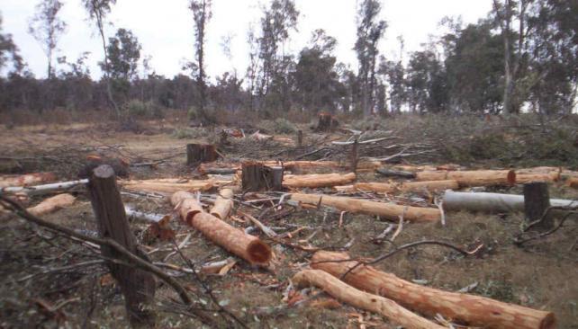 En el nordeste. La mayoría de los desmontes se produjo en los departamentos Río Seco y San junto (La voz / Archivo).