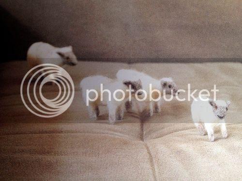 photo littlefeltedanimals-sheep_zpsa580f837.jpg
