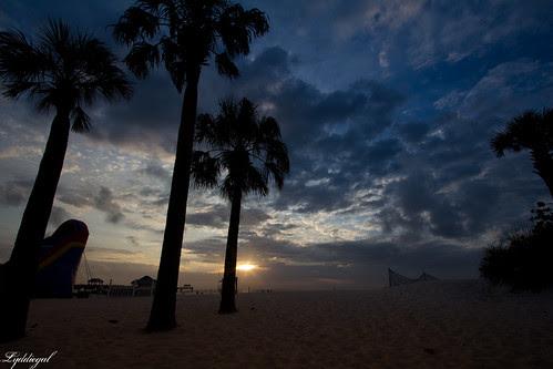 palms sunset.jpg