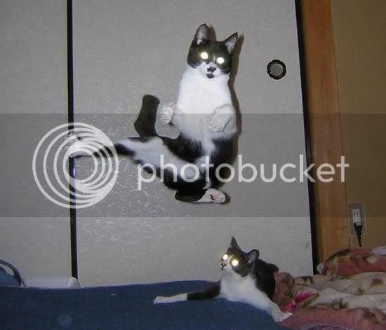 Damn Evil Cats