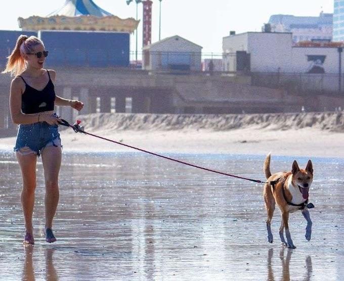 Mi perro escapa al soltarlo: cómo pasear a tu perro sin fallar en el intento