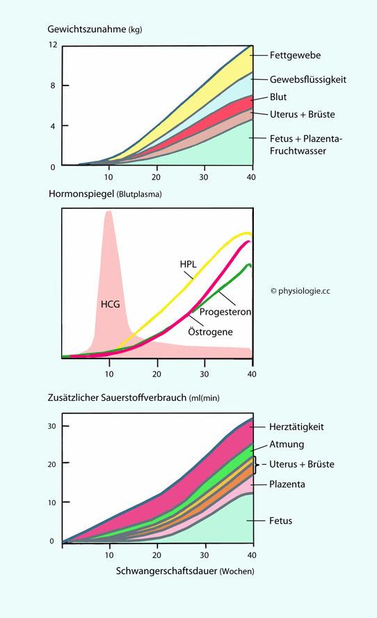 Gewichtszunahme In Der Schwangerschaft Tabelle