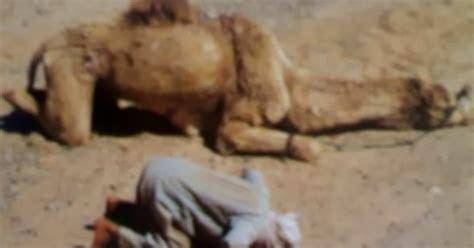 gambar hewan unta tentang gambar hewan