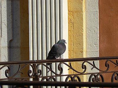 pigeon devant la cathédrale.jpg