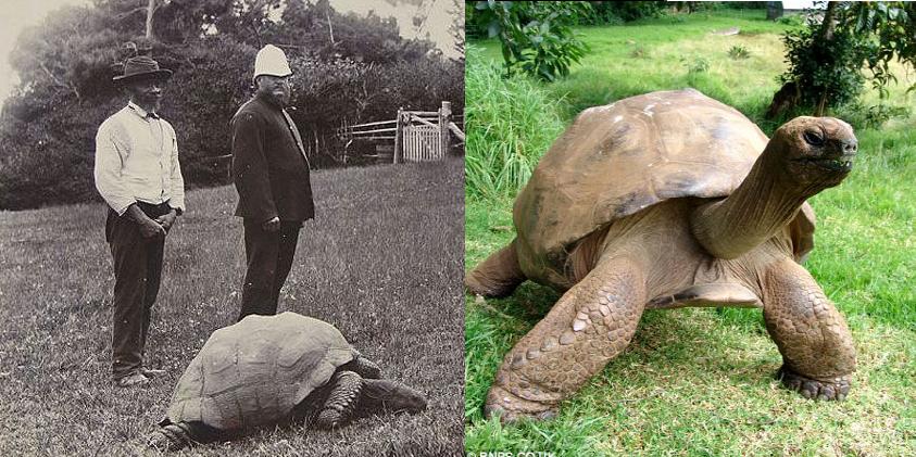 Born circa 1832 in Seychelles
