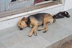 the dog has more common sense than man he does not wear slippers by firoze shakir photographerno1