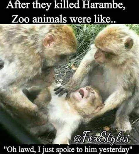 Must See Harambe The Gorilla Memes: ohlawd   Bossip