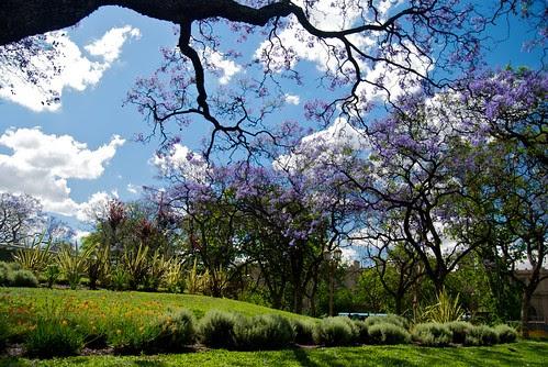 Plaza Miserere garden