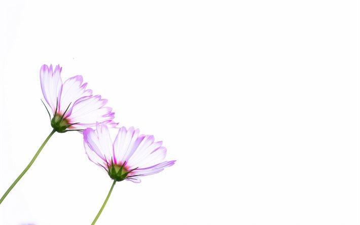 Descargar Fondos De Pantalla Fondo Blanco Las Flores El