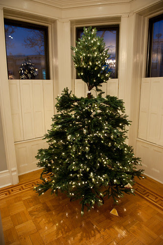 ChristmasTreeBalsamHill-10