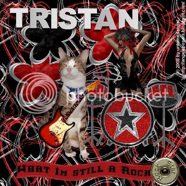 Rock,Tabby Cat,Domestic Cat,Sir Tristan