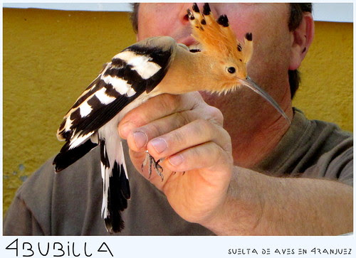 Suelta de aves en Aranjuez: 30 de junio de 2012