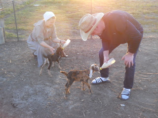 Bottle Feeding Orphan Goat Kids