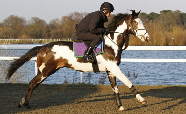Racehorse Modern Society