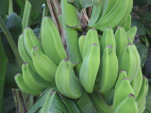 KW Bananas