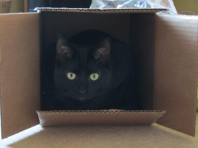 cat in the box 003