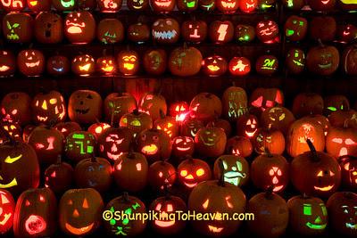 Pumpkins at The Steeple, Delafield, Wisconsin