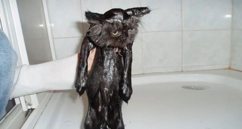 Fotografias engraçadas de gatos tomando banho 25