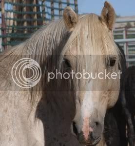 Wild horses horse slaughter,Wild horses CLOUD
