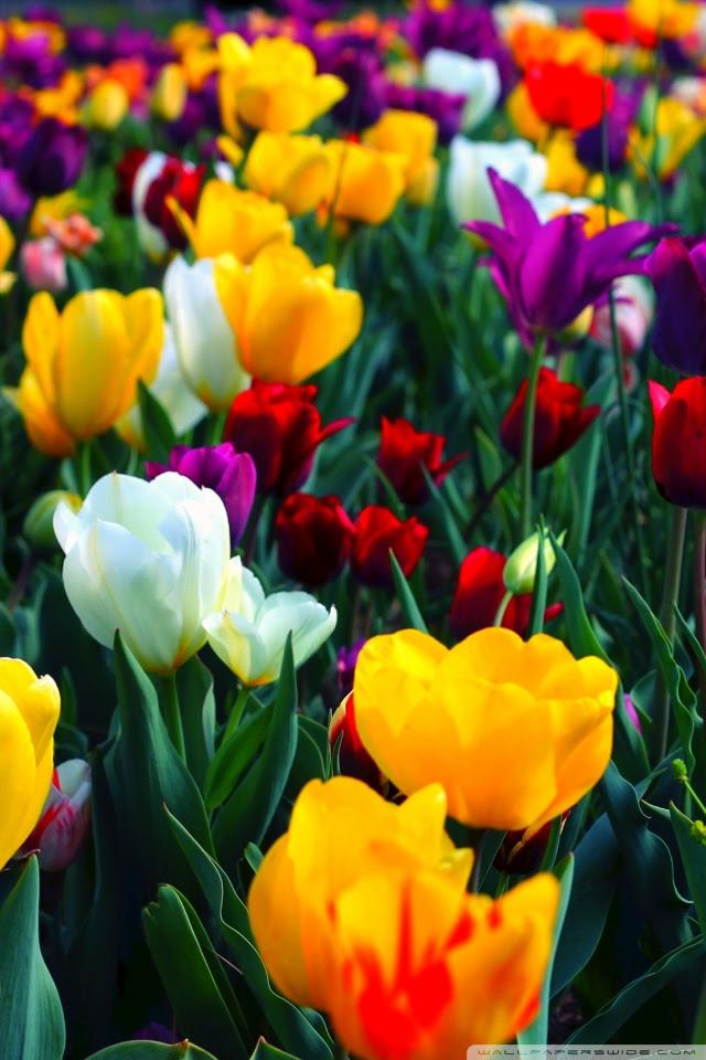 Colorful Flowers 4k Hd Desktop Wallpaper For Dual Monitor