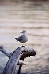 Bird in Queenstown
