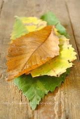 Foglie di Castagno-Chestnut Leaves