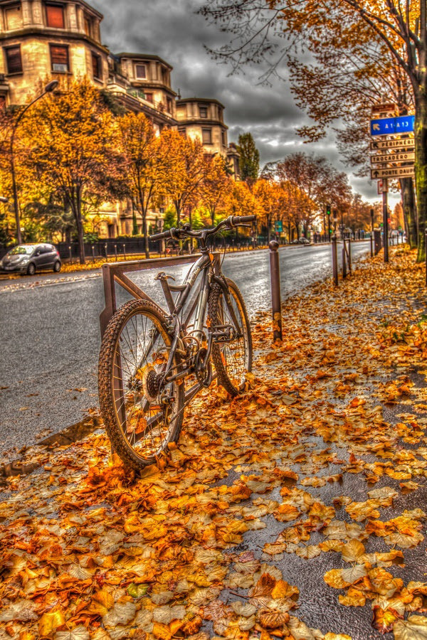 "500px / Photo ""Gold fall in Paris cityscape"" by Valerii Tkachenko"