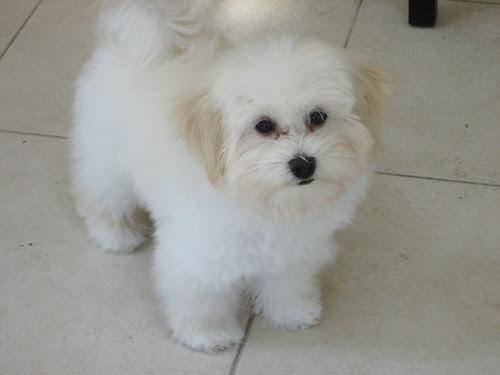 Toby 15 weeks