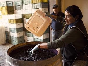 Mulher trabalha em vinícola no Chile, varginha (Foto: Pedro Henrique Barros/Wine World Adventure)