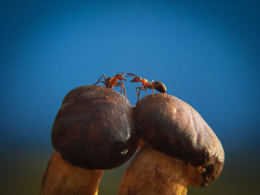 mushroom-photography-vyacheslav-mishchenko-35