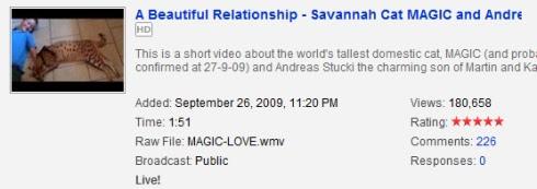 magic savannah cat and Andeas video stats