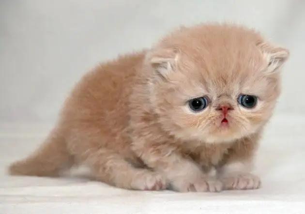 gato-triste-2