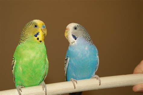Pet Birds ? WeNeedFun