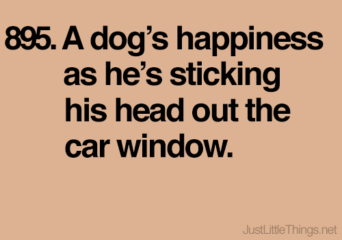 Or when you're about to give him a treat!