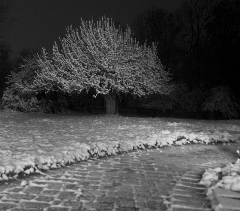 A snow-yard!