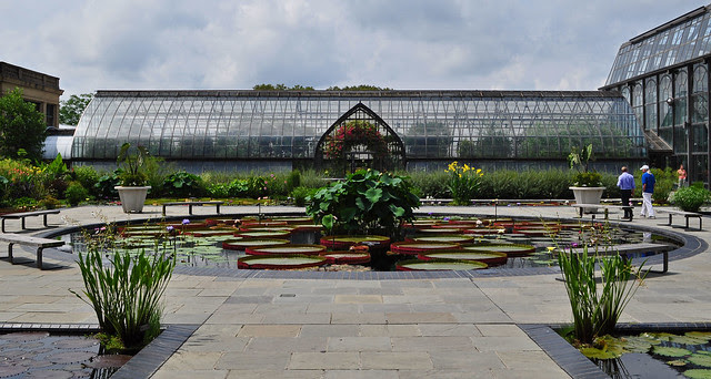 Conservatory - Waterlily Display -  (3)