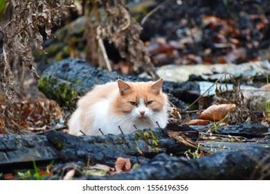 बिल्ली बच गई-The cat survived